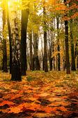 Outono dourado, verão indiano — Foto Stock