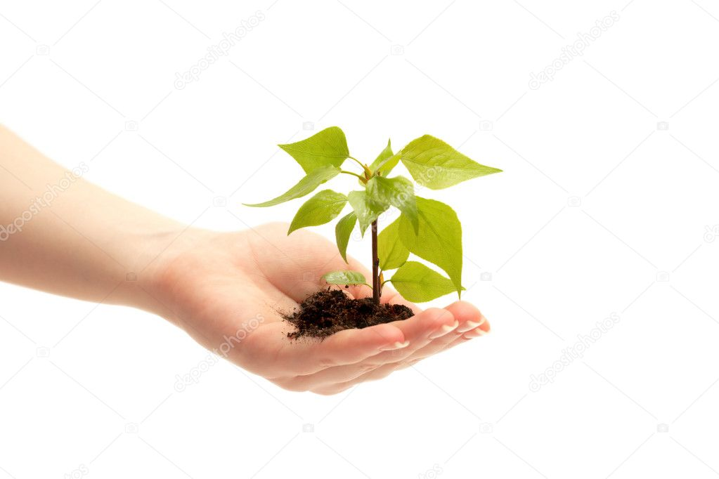 Female hand holding a small tree over white — Stock Photo #2370494