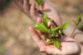 Young tree twig against hands — Stock Photo