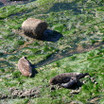 Seals (5306) — Stock Photo