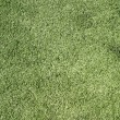 Green Lawn — Stock Photo #1589394