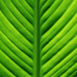 Royalty-Free Stock Photo: Fresh green leaf.