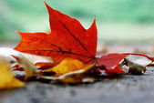 Fallen autumn leaf. — Stock Photo