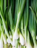 Cebollas. — Foto de Stock