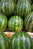 Watermelon — Stok fotoğraf