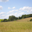 Rural landscape with crops — Stock Photo