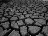 Mud Flats 2 — Stock Photo