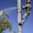 Tree lopping / Palm tree lopping — Stock Photo #1316626