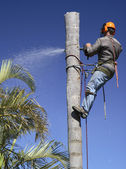 Tree lopping / Palm tree lopping — Stock Photo