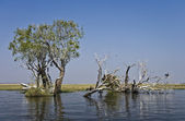 Chobe river — Stock Photo