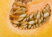 Kent pumpkin — Stock Photo