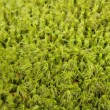 Green moss background with soft focus — Stock Photo #1317137