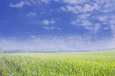 Blue cloudy sky and green field — Stock Photo