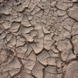 Stock Photo: Cracked earth background