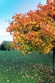Autumnal tree — Stock Photo