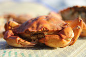 Crab. Crab on a bamboo substrate. — Stock Photo