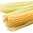Freshly harvested corn — Stock Photo #1366750