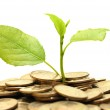Coins and plant — Stock Photo
