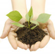 Green plant in a hand — Stock Photo