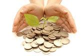 ženské ruce chránit bohatství — Stock fotografie