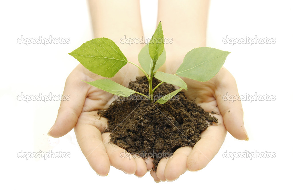 Growing green plant in a hand isolated on white background — Stock Photo #1386752