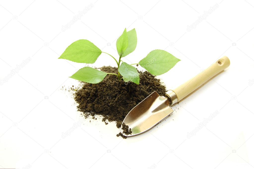 Cultivated of a young plant on a white background — Stock Photo #1386755