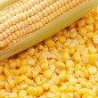 Stock Photo: Ear of fresh corn and tinned corn