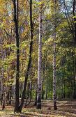 太陽の天気で色鮮やかな秋の公園 — ストック写真