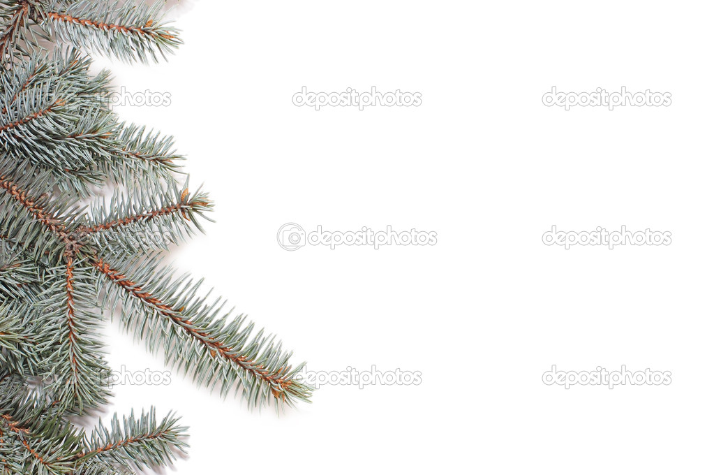 Closeup of fir tree branch isolated on white — Stock Photo #1409556