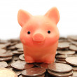 Small pig sits on coins — Stock Photo #1436611