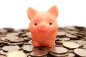Small pig sits on coins — Stockfoto