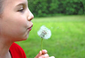 Girl blowing dandelion on a meadow — Stock Photo