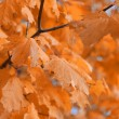 Stock Photo: Autumn leaves and the blue sky