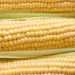 Stock Photo: Freshly harvested corn, close up