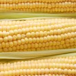 Freshly harvested corn, close up - Stock Photo