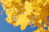 Autumn leaves and the blue sky — Stock Photo