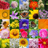 Colourful collage from beautiful colours — Stockfoto