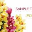 Beautiful branch of a fresh orchid - Stock Photo