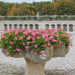 Flowers in a vase in park Chenonceau - Stock Photo
