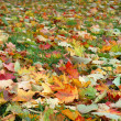 Stock Photo: Autumn leaves on a green grass