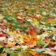 Autumn leaves on a green grass - Stock Photo