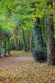 Kind on avenue with the fallen leaves — Stock Photo