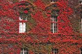 Beautiful facade of a building — Stock Photo