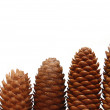 Pine cones isolated on white background — Stock Photo