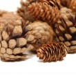 Composition from several fir cones — Stock Photo