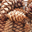 Background of pine cones — Stock Photo