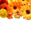 Beautiful border from fresh flowers on a white b — Stock Photo #2605230