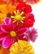 Beautiful border from fresh flowers on a white b — Stock Photo #2605345