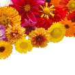 Beautiful border from fresh flowers on a white b — Stock Photo