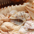 Seashell background with various kinds of shells — Stock Photo